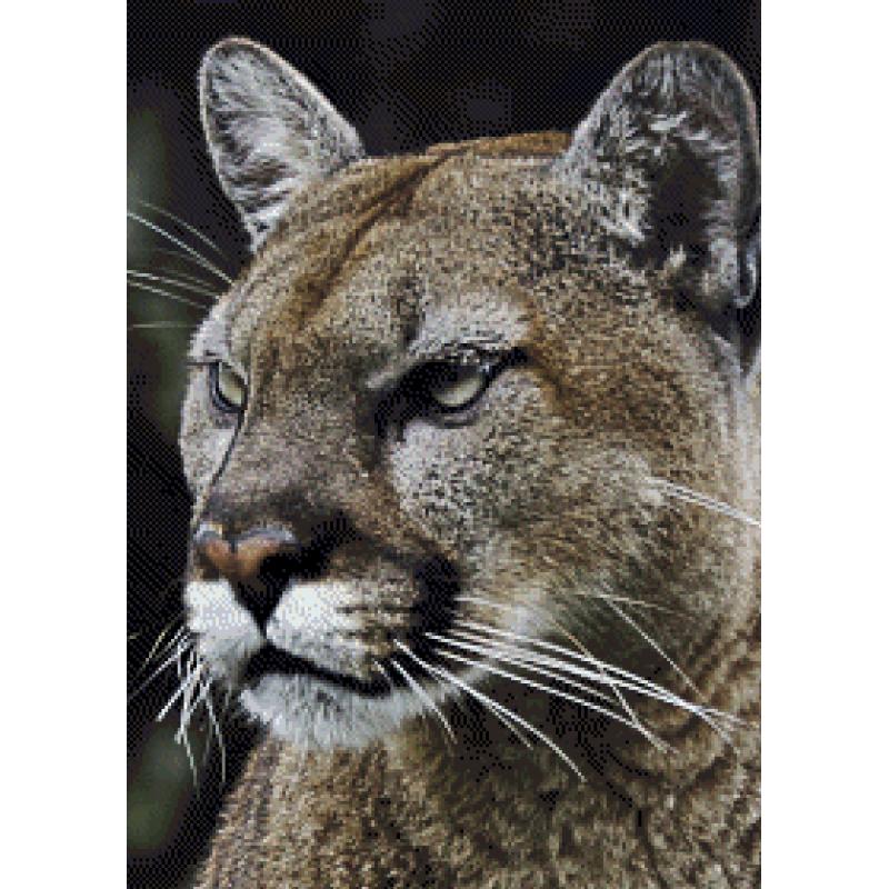 Puma 1 - 50 x 70 cm