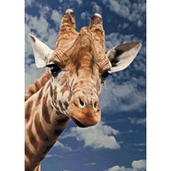 Giraffe 1 - 50 x 70 cm