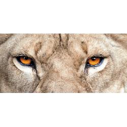 Löwe 1 150 x 70 cm
