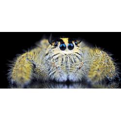 Spider 2 - 150 x 70 cm