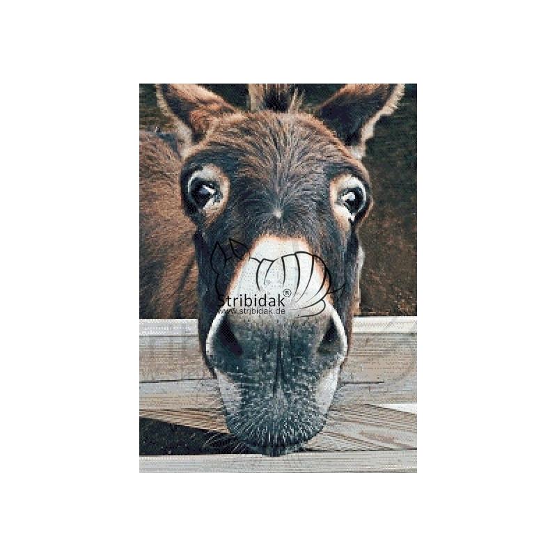 Donkey 1 - 50 x 70 cm