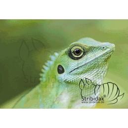 Lizard - 100 x 70 cm