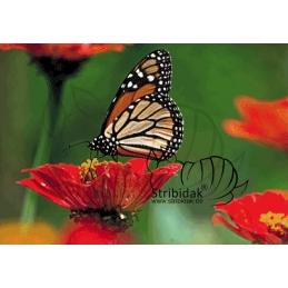 Butterfly - 100 x 70 cm