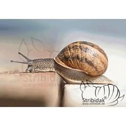 Snail - 100 x 70 cm