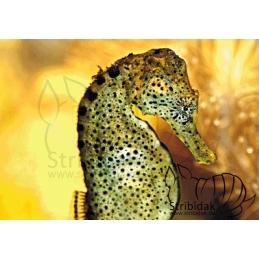 Seahorse - 100 x 70 cm