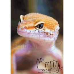 Gecko - 50 x 70 cm
