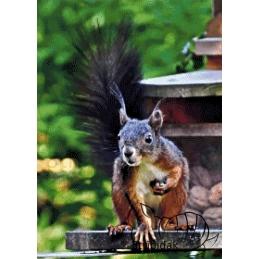 Squirrel - 50 x 70 cm