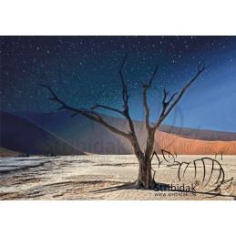 Namib - 100 x 70 cm