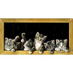 Cats - 100 x 50 cm