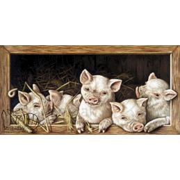 Pigleds - 100 x 50 cm