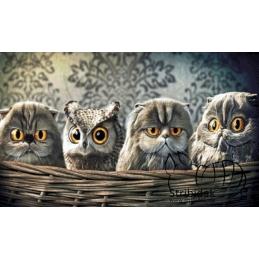 Owls & Cats - 100 x 60 cm